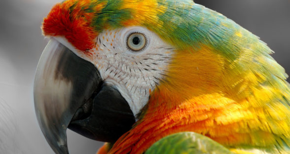 Parrots Sound Library