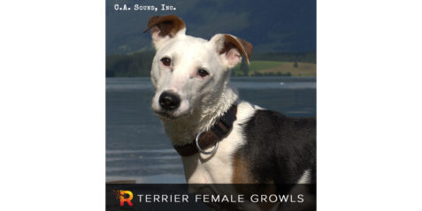 Coll Anderson – Terrier Female Growls
