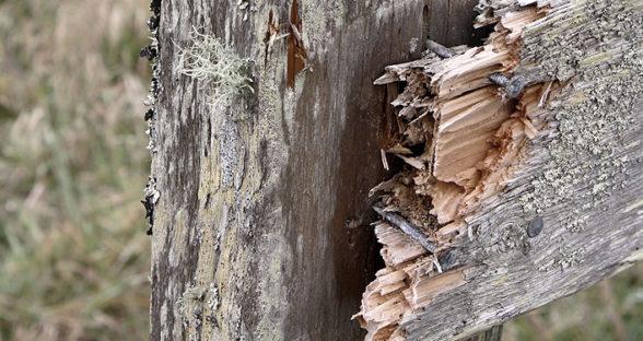 Destruction: Wood Break