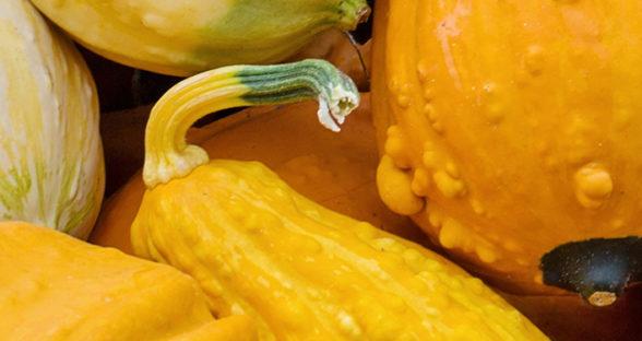 Fruit & Veg: Squash