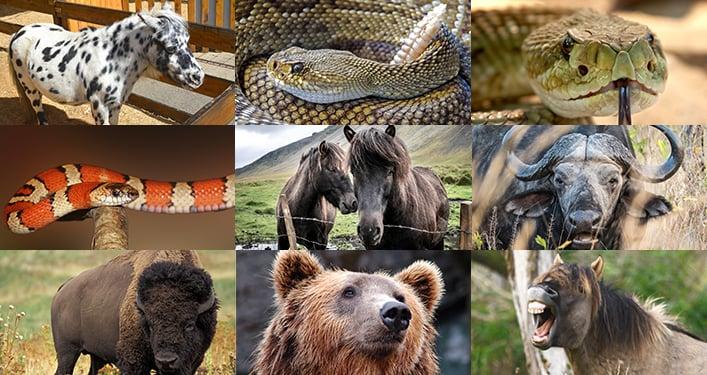Sounddogs Wild Animals Bundle